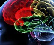 ارتباط ماده خاکستری مغز و لکنت زبان
