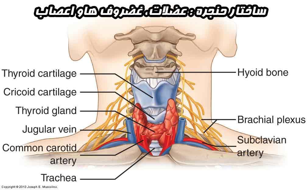 منوال تراپی حنجره | درمان گرفتگی صدا